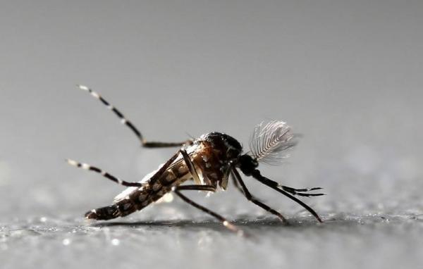 Casos da febre chikungunya aumentam quase 120% no Piauí