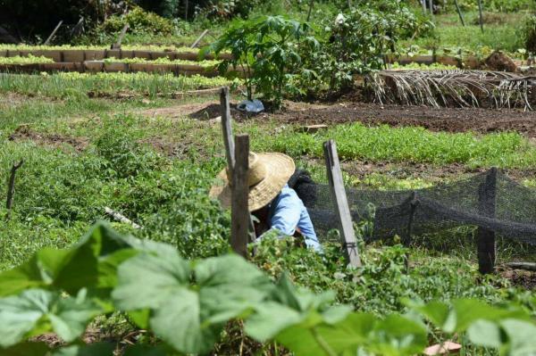 Secretaria de Desenvolvimento Rural realiza curso sobre uso consciente do agrotóxico