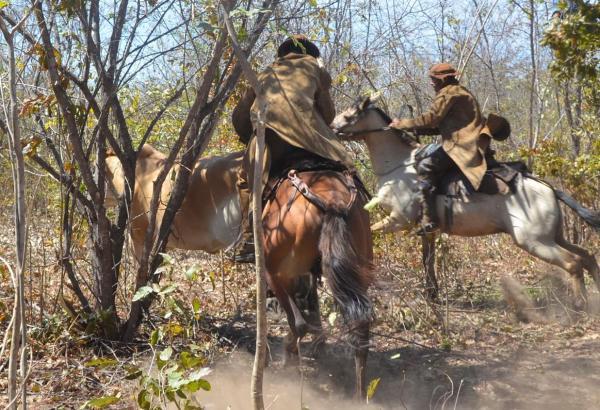 1ª Pega de Boi no Mato da Fazenda São Francisco (Unha de Gato) município de Água Branca é realizada com sucesso; imagens