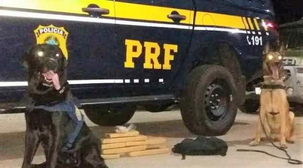 PRF apreende 5 kg de maconha com passageiro de ônibus no Piauí