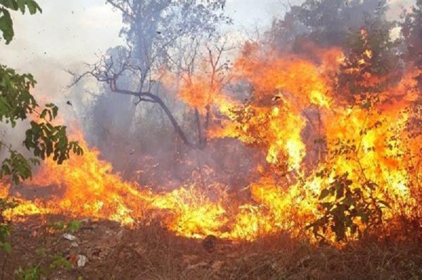 Incêndio atinge vegetação e assusta moradores de cidade do Piauí
