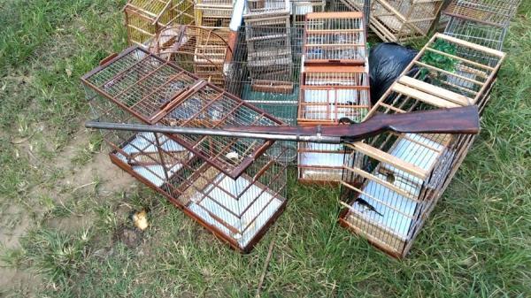 PM fecha rinha de pássaros e apreende 35 animais em Teresina