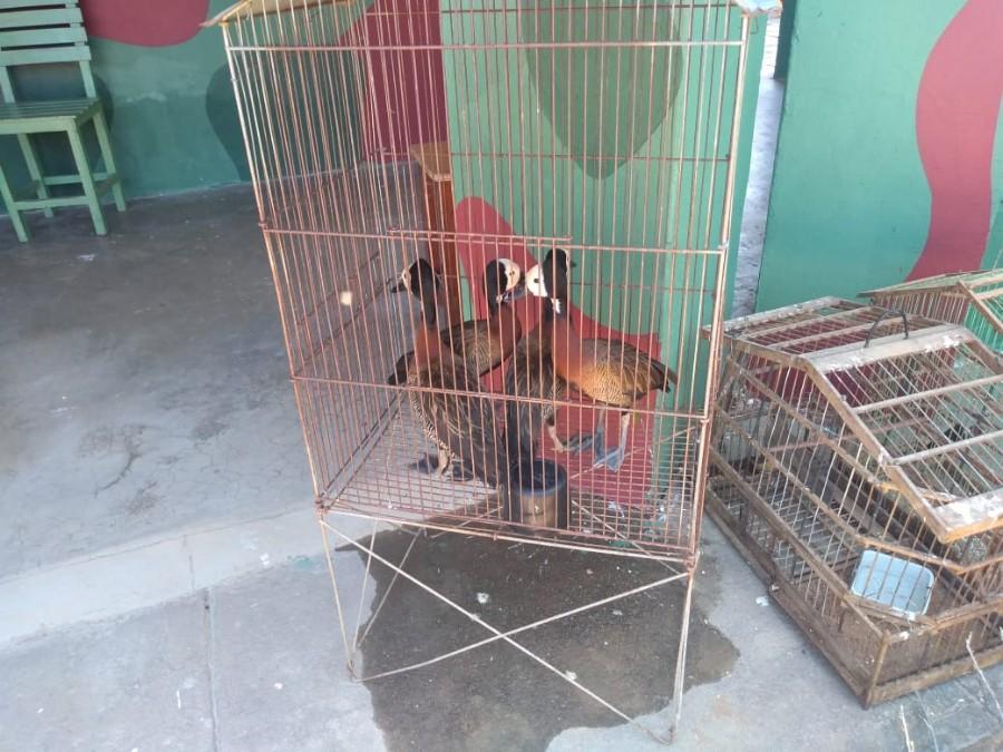 Operação apreende 151 animais silvestres no interior do Piauí